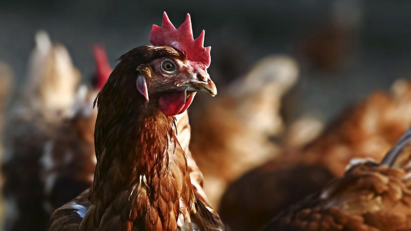 Казахстан запретил ввоз продукции более 30 российских птицефабрик