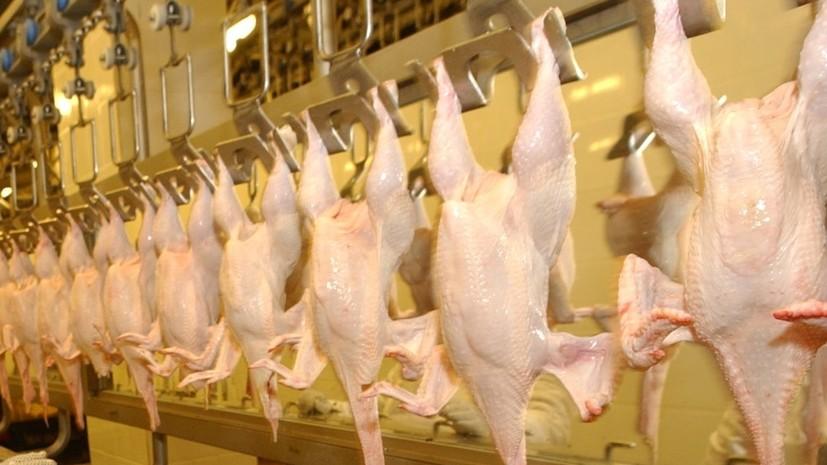 В Башкирии выявили заражённую птичьим гриппом продукцию пензенских птицефабрик