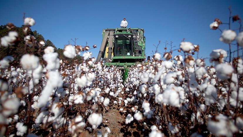 Тонкая материя: как рост цен на хлопок может повлиять на мировой текстильный рынок
