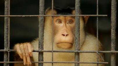 Россельхознадзор уточнил данные о животных, попавших под запрет на ввоз из Армении