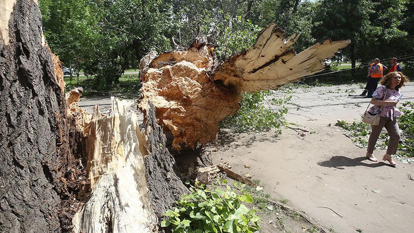 В Москве намерены восстановить упавшие из-за ураганов деревья