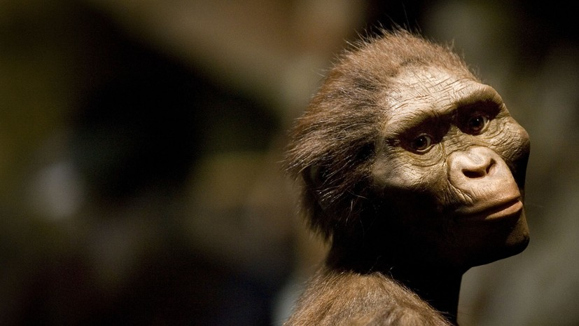 «Пробел в эволюции»: как австралопитеки освоили прямохождение