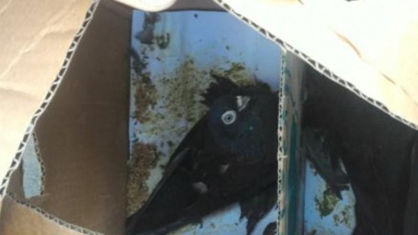 На границе России и Казахстана задержали партию декоративных голубей