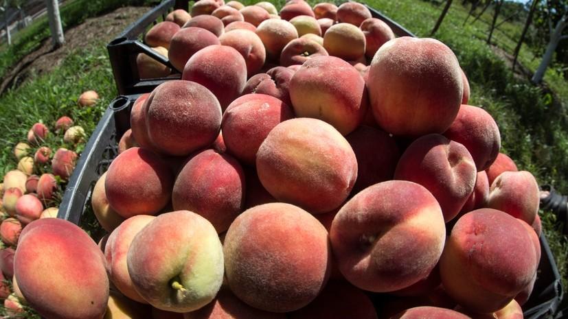 Роспотребнадзор рассказал, как выбирать сезонные овощи и фрукты