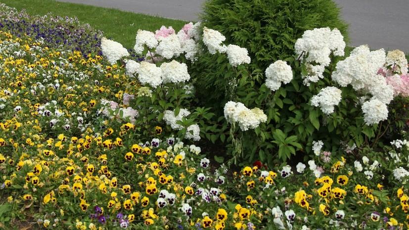 В Геленджике призвали не поливать цветы питьевой водой