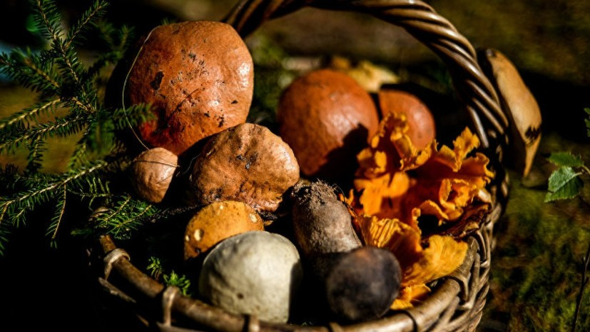 Роспотребнадзор дал рекомендации по правильному сбору грибов