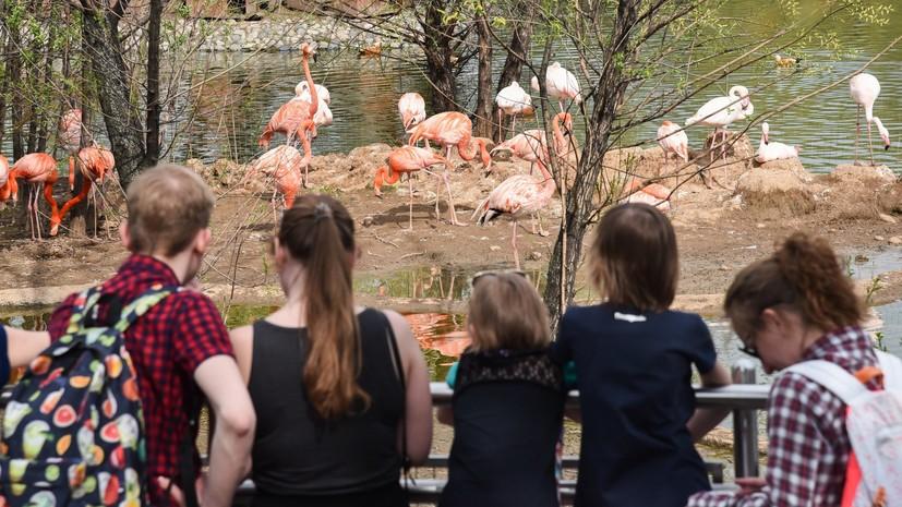 В Московском зоопарке планируют открыть детскую зону