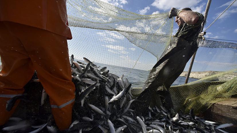В России предложили ввести суточную норму вылова для рыболовов