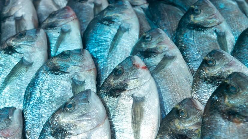 Власти Подмосковья планируют увеличить производство рыбы в регионе на 10% в 2018 году