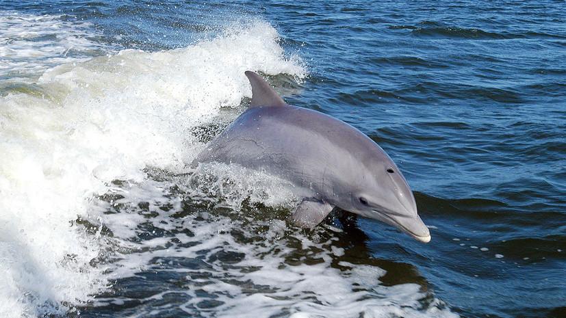 Тест RT ко Всемирному дню китов и дельфинов
