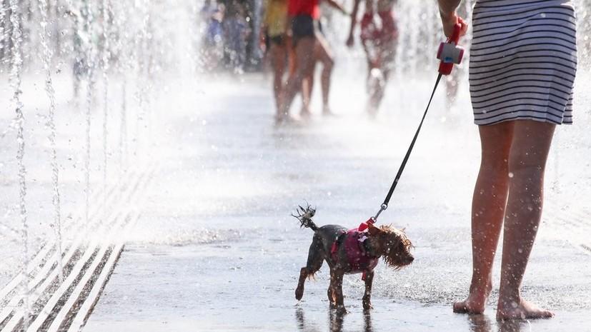 Синоптики рассказали о возвращении жары в Москву 26 июля