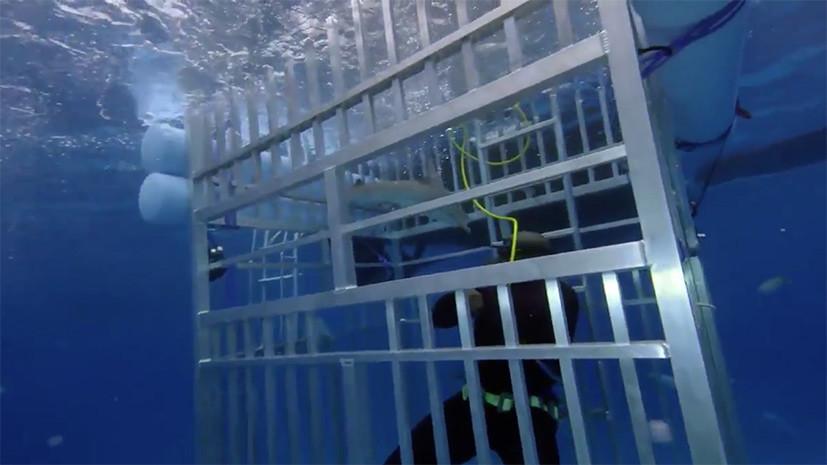 Акула попала в клетку легендарного баскетболиста Шакила О'Нила во время съёмок телешоу