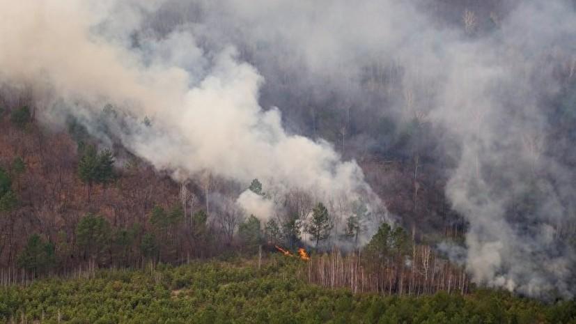 Число лесных пожаров в Ленинградской области выросло в пять раз по сравнению с 2017 годом