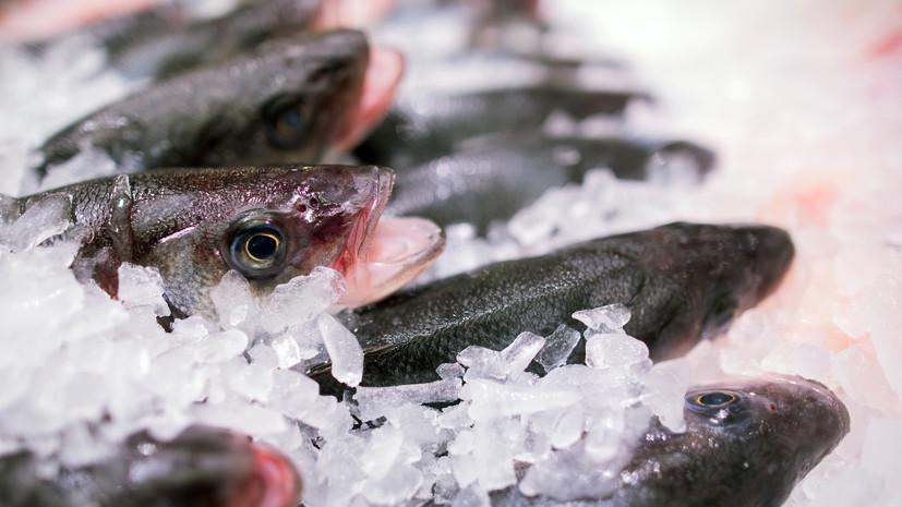 Роспотребнадзор проверил качество импортной рыбы