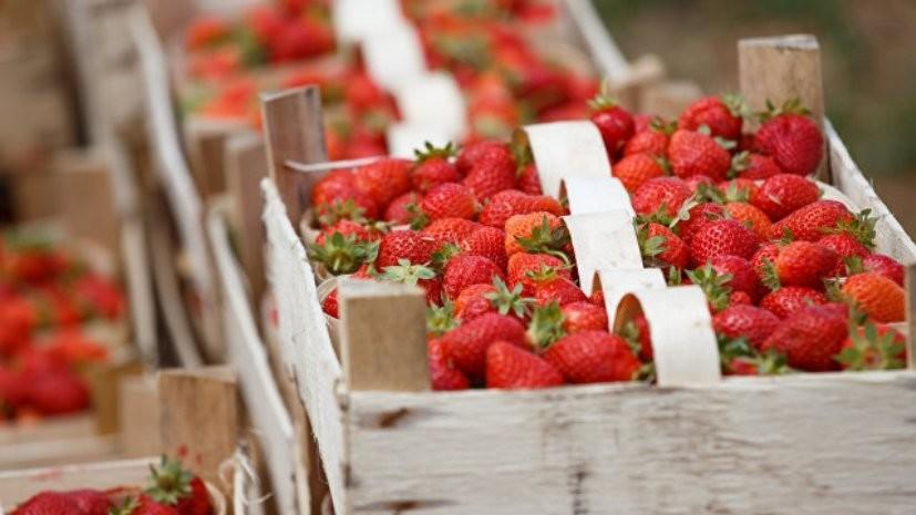 Роспотребнадзор рассказал об итогах проверки импортных плодов и ягод