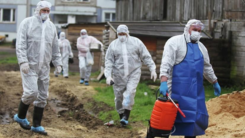 В Свердловской области ввели карантин после обнаружения вируса АЧС
