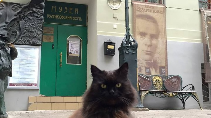 Из «Булгаковского дома» похитили кота Бегемота