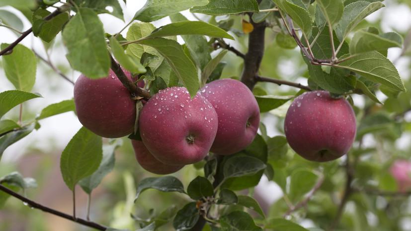 Четыре года назад в России начало действовать продовольственное эмбарго, которое