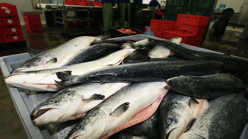 Росрыболовство спрогнозировало снижение стоимости красной рыбы