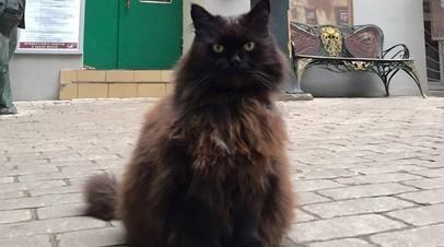 Найден похищенный кот Бегемот