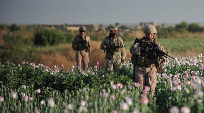 Морские пехотинцы США в полях опиумного мака