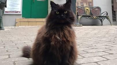 В музее-театре «Булгаковский дом» рассказали о самочувствии кота Бегемота после похищения