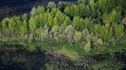 Глава Минприроды заявил о необходимости реформировать лесную отрасль