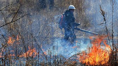 В Удмуртии оценили ущерб от лесных пожаров в 2018 году