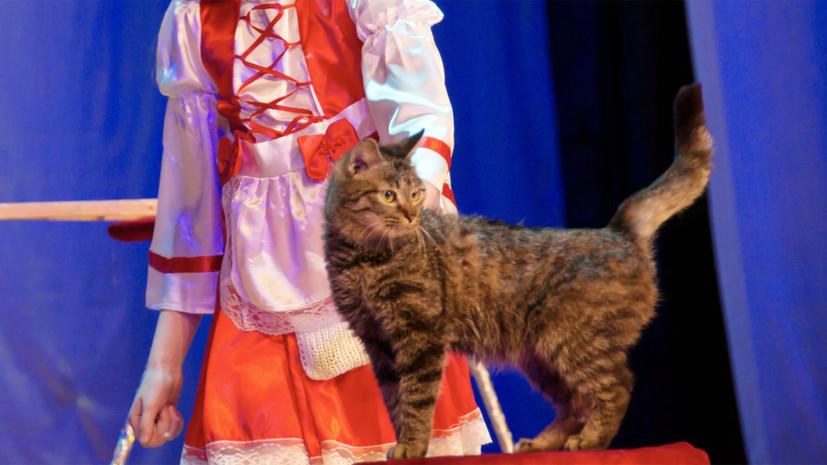 В Амурской области полиция расследует гибель дрессированного кота