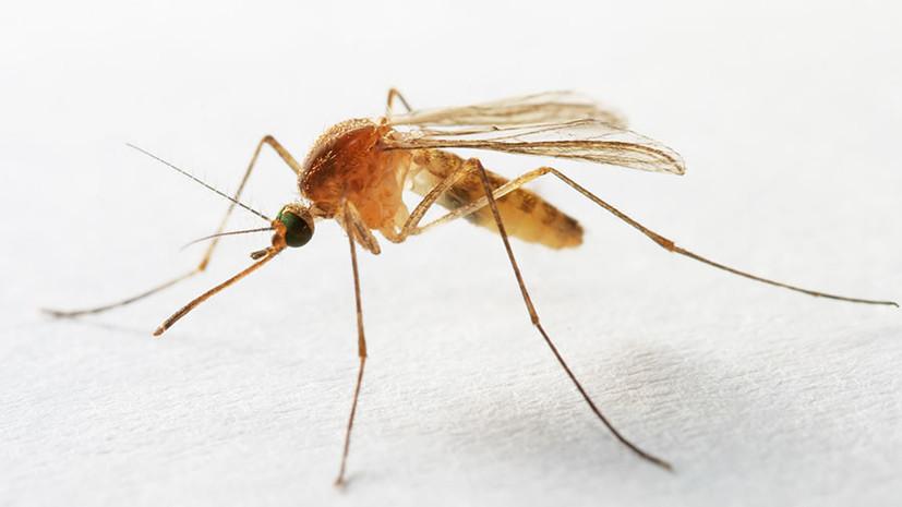 Группа писка: как комары распространяют микропластик по планете ...