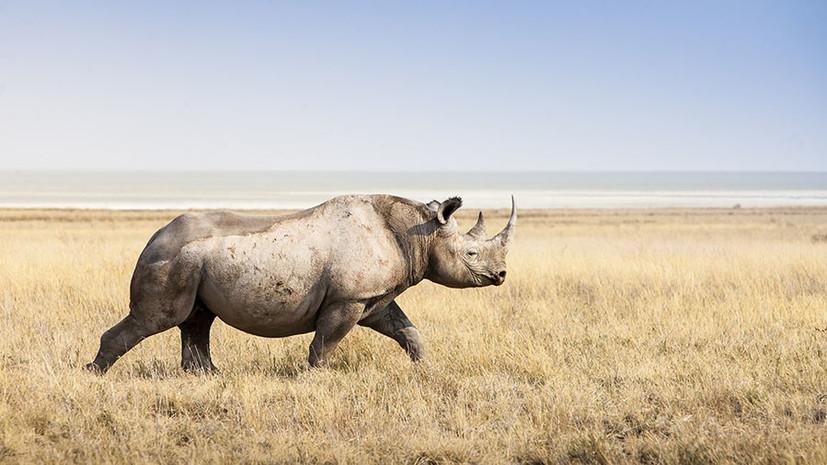 Тест RT: что вы знаете о редких животных?