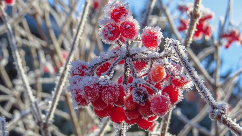 В Краснодарском крае предупредили о заморозках до -2 °С