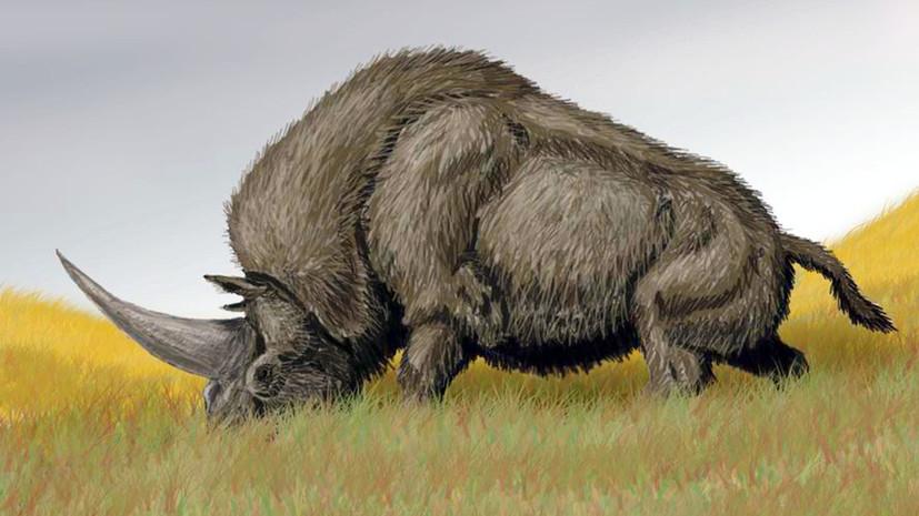 По следам слонов и единорогов: кто обитал в приазовских степях миллион лет назад