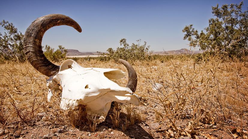 «Место слонов займут крысы»: учёные предрекли исчезновение крупных млекопитающих к концу XXI века
