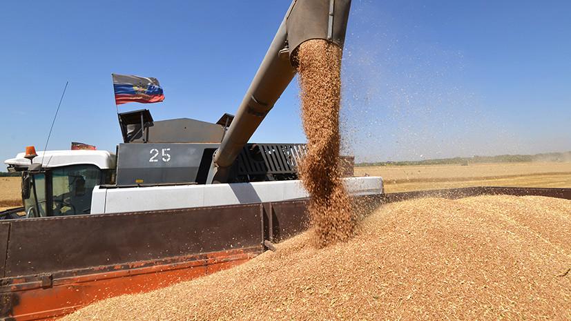 «Плодотворные изменения»: как российские производители пшеницы потеснили западных экспортёров на мировом рынке зерна
