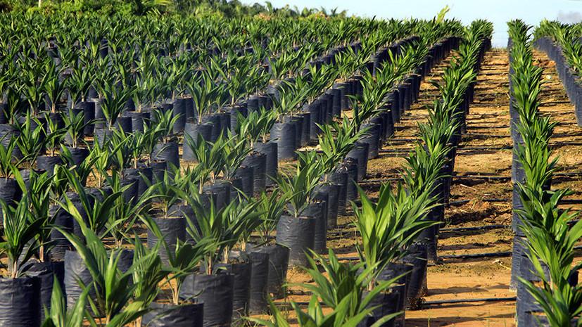 СМИ: Импорт пальмового масла в Россию вырос на 20% в первые полгода