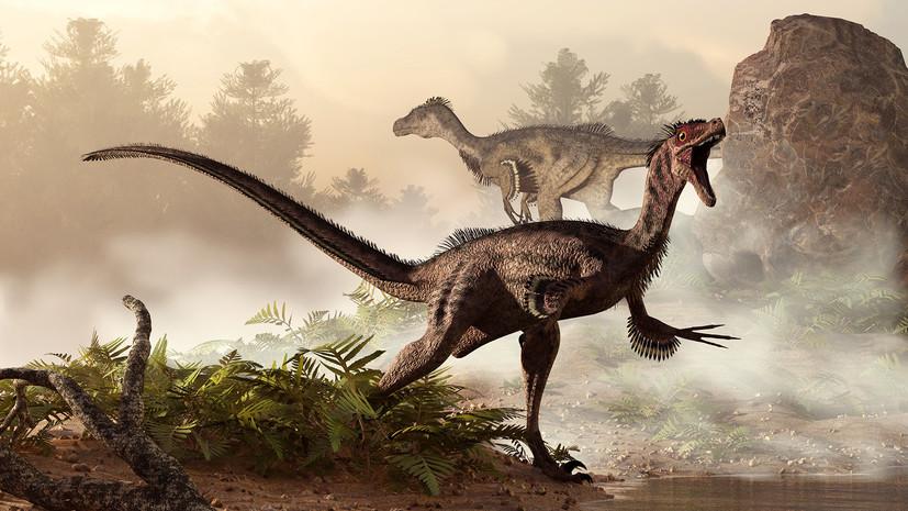Дыхание мезозоя: учёные нашли сходство между современными птицами и динозаврами