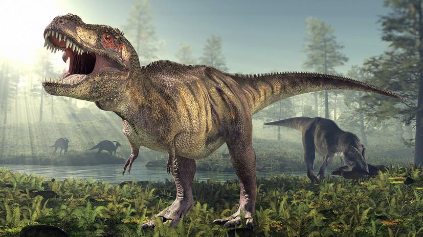 что вы знаете о динозаврах?