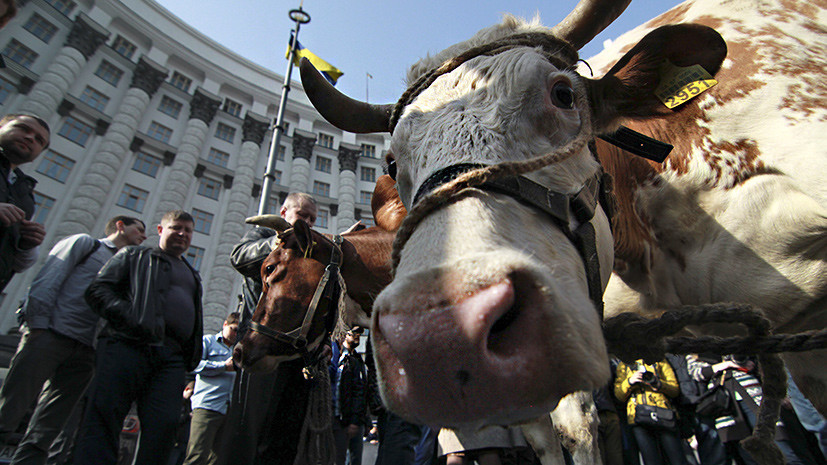 «Невысокая продуктивность»: США прогнозируют сокращение производства молока на Украине