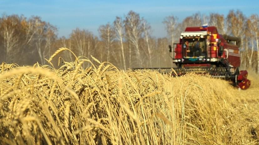 Минсельхоз рассказал о прогнозе по урожаю зерновых в 2018 году