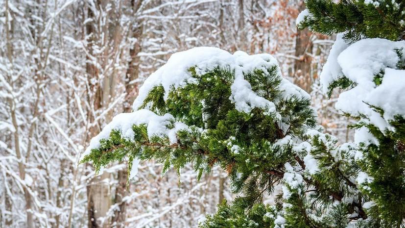 В Гидрометцентре рассказали о погоде в Хабаровском крае в ближайшую неделю