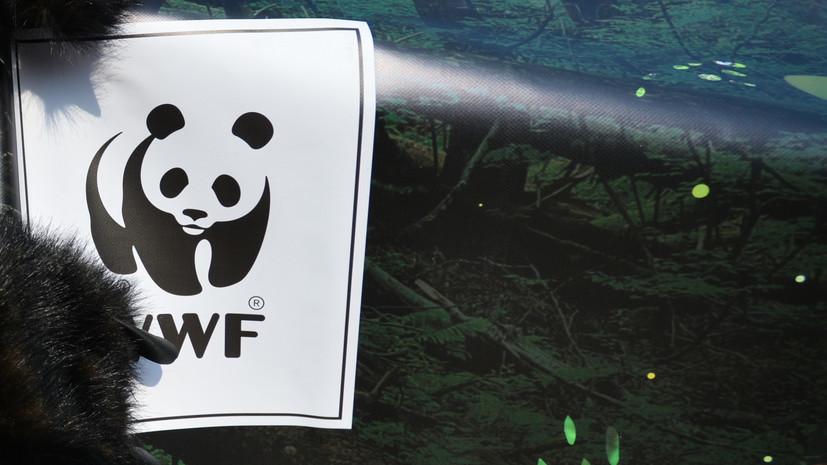WWF сообщил о сокращении численности диких животных на 60%