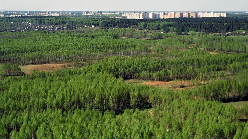 За стеной из леса: ОНФ разработал федеральный закон о расширении площади «зелёных щитов»