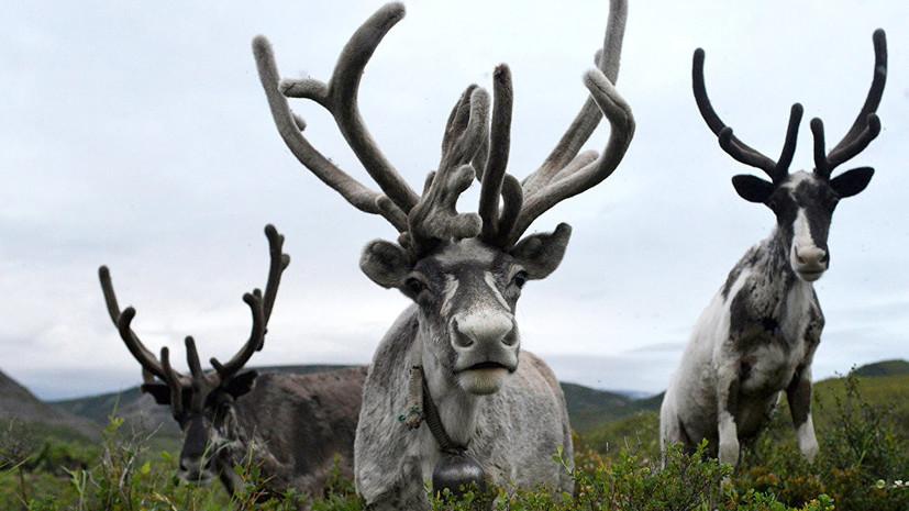 Более трёх тысяч учителей России приняли участие в уроке WWF о сохранении редких видов животных