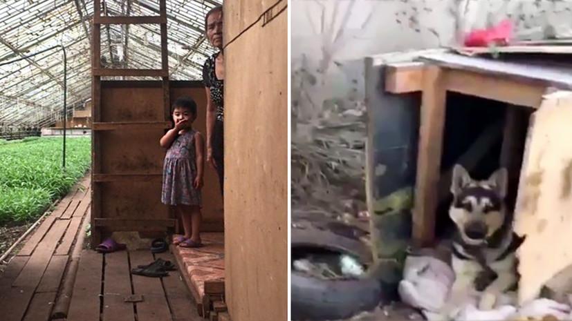 «Огромный ангар, откуда доносится лай»: жители подмосковной деревни обвинили фермеров из Вьетнама в живодёрстве