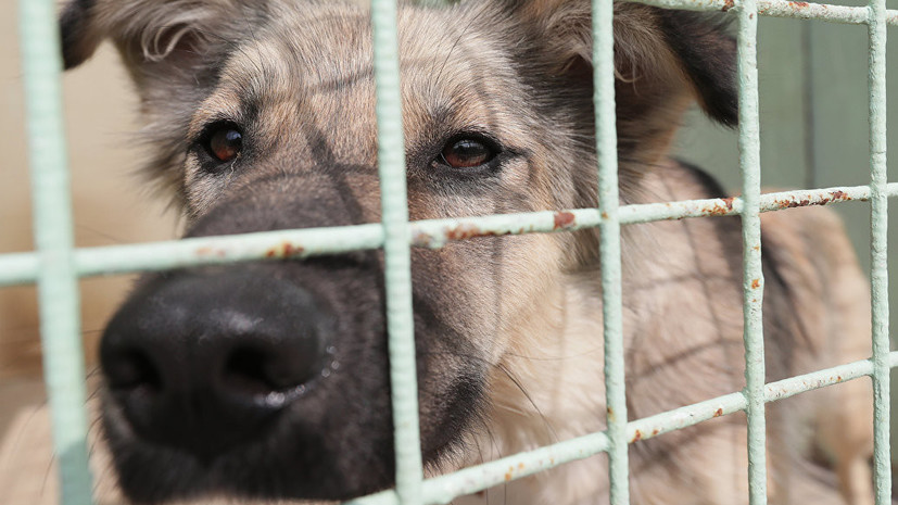 В городах России открывают четыре приюта для бездомных собак