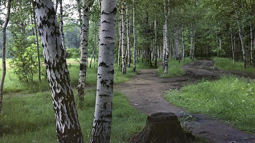 На Урале согласовали проект благоустройства Шарташского лесопарка