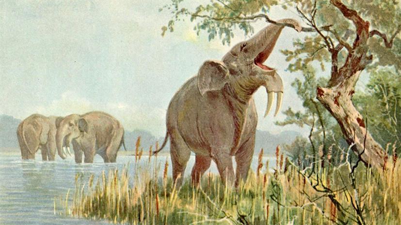 Нечеловеческий фактор: почему исчезли представители древней африканской мегафауны