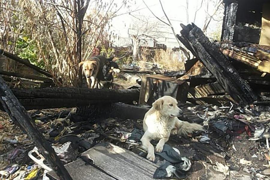 «Кутаю его в пять одеял, сверху — целлофан»: в Саратове пенсионерка и её сын-инвалид живут на пепелище сгоревшего дома 2