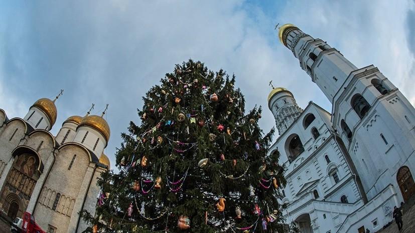 Главную новогоднюю ель России срубят 16 декабря в Подмосковье